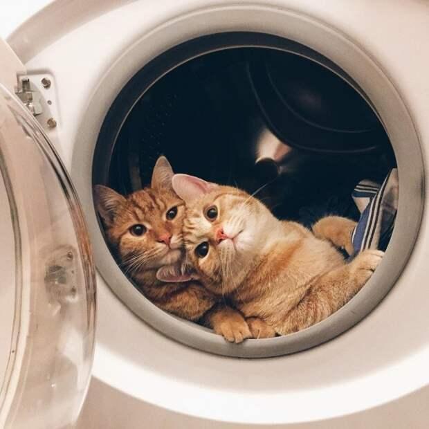 20 вещей, которые понял каждый, у кого два кота двое, коты