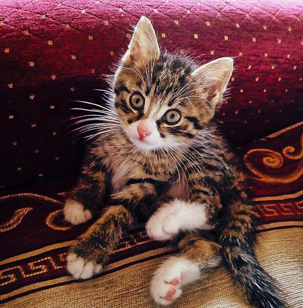 Подарили мне летом вот такого кота...