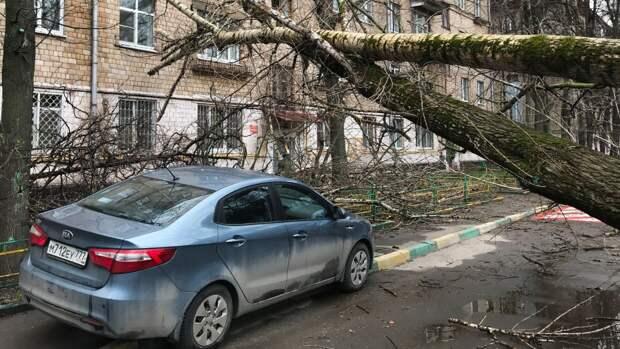 Штормовой ветер в Москве свалил 56 деревьев и повредил 44 автомобиля