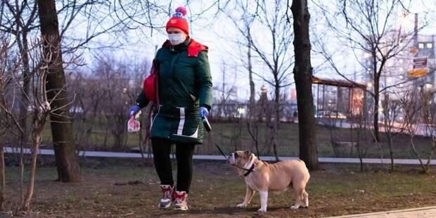 Волонтеры Москвы ежедневно выгуливают 120 собак московских пенсионеров Фото: mos.ru