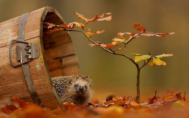 Осенние подкормки деревьев и кустарников