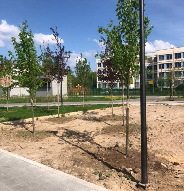Молодое деревце у метро «Лефортово» закрепили в лунке