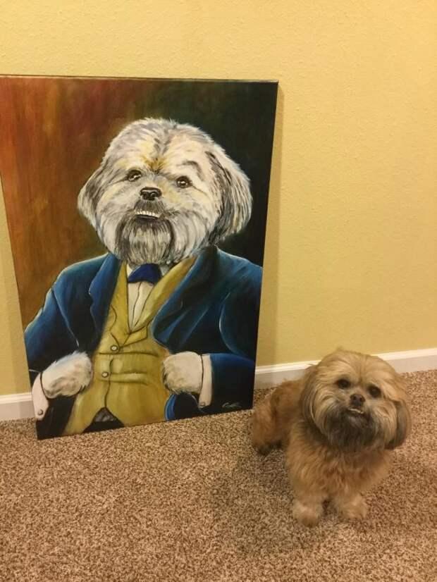 Портрет на заказ животные, жизнь, мир, роскошь, собака, удобство, фото