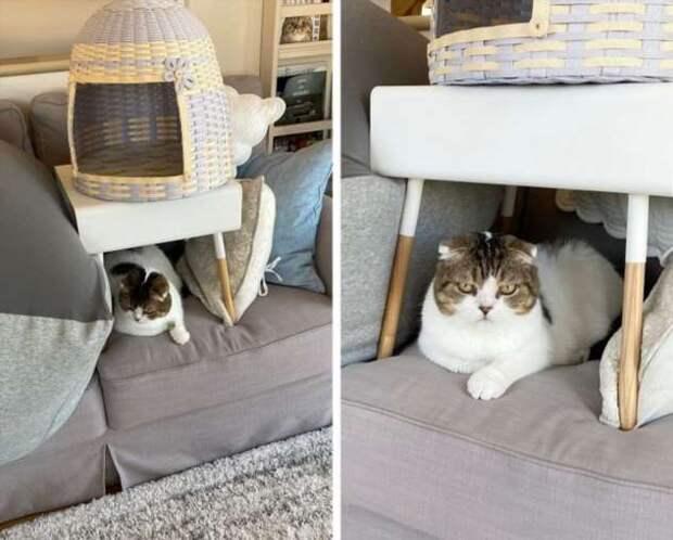 20+ котов, которые пристроили свою пушистую попу на чужое место