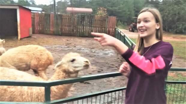 Смешные Животные на ферме