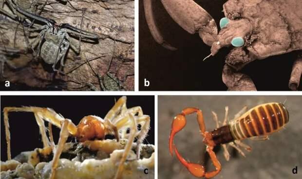 Страшно интересно: о существовании этих животных вы даже не догадывались
