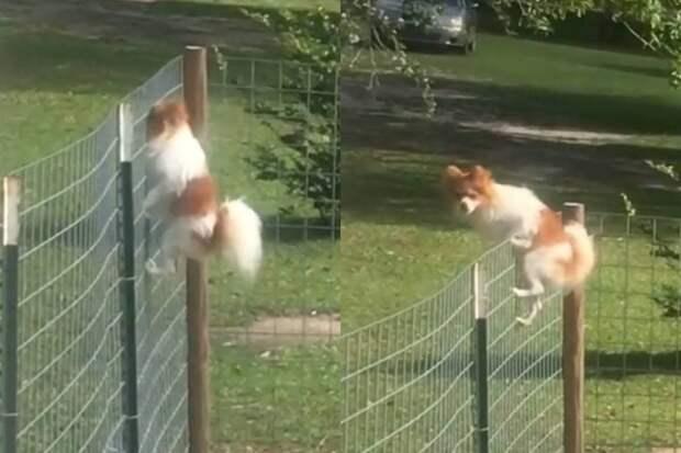 «Ясвободен»: дерзкий побег собаки извольера заставил соцсети хохотать