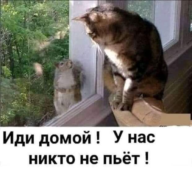 Возможно, это изображение (текст «иди домой! у нас никто не пьёт!»)