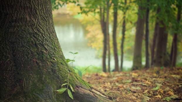 Ученые подсчитали, сколько лесов исчезло с Земли за последние 60 лет