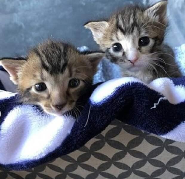 Двое котят