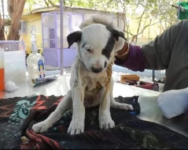 Бездомная четвероногая мама громко лаяла, отчаянно призывая людей на помощь к своему щенку