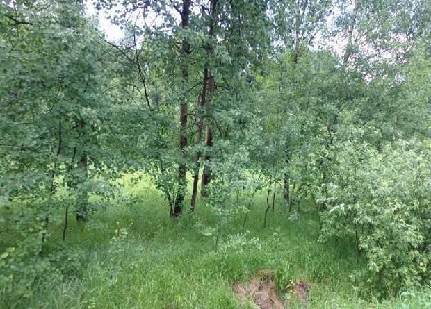 Страшную находку обнаружили в лесополосе вблизи улицы Планерной