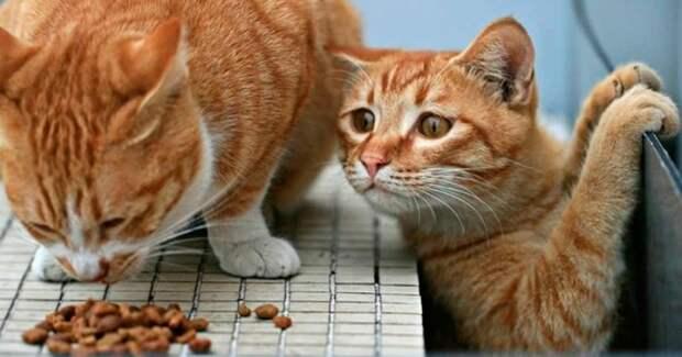 Чудеса чудесные…) Похождения кота Таза или История потерянного солнышка!