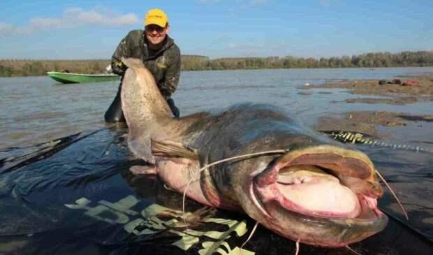 Когда рыбаки выловили гигантского сома, они были удивлены тем, что увидели дальше
