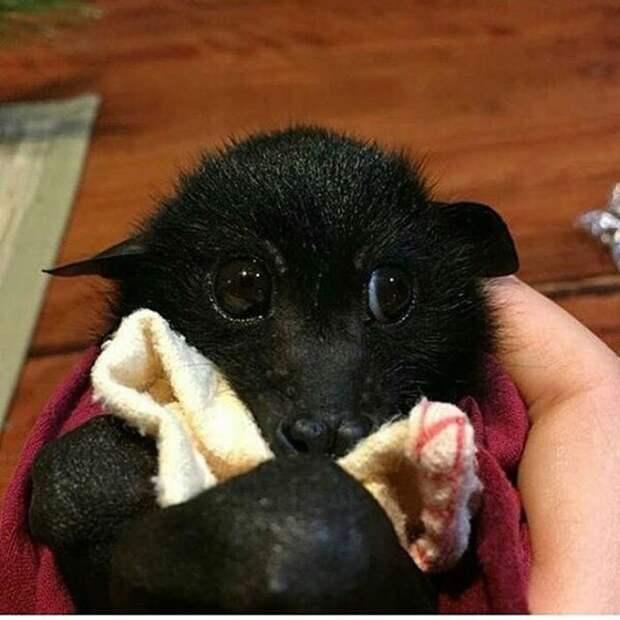 10 доказательств того, что летучие мыши очень милые