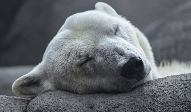 Проверка пройдет взоопарке Екатеринбурга после сообщений СМИ огибели белого медведя