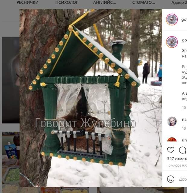 Фото дня: из Жулебинского леса украли особняк для белок