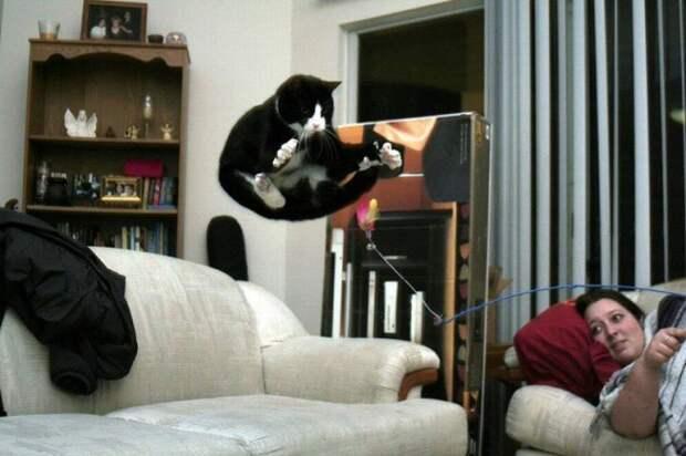 Подборка для любителей веселых и забавных котиков. Фото сделанные в нужный момент