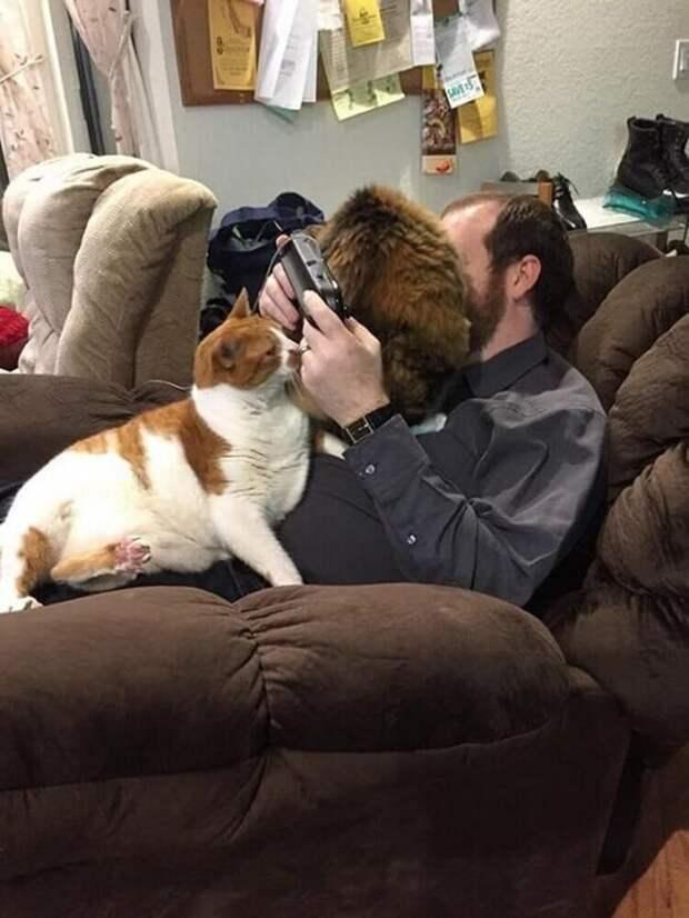 Коты, которые доведут любого хозяина до безумия