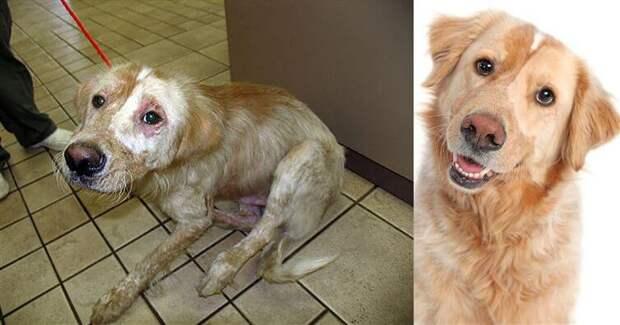 На что способна любовь… 15 собак, которых наконец-то забрали домой!