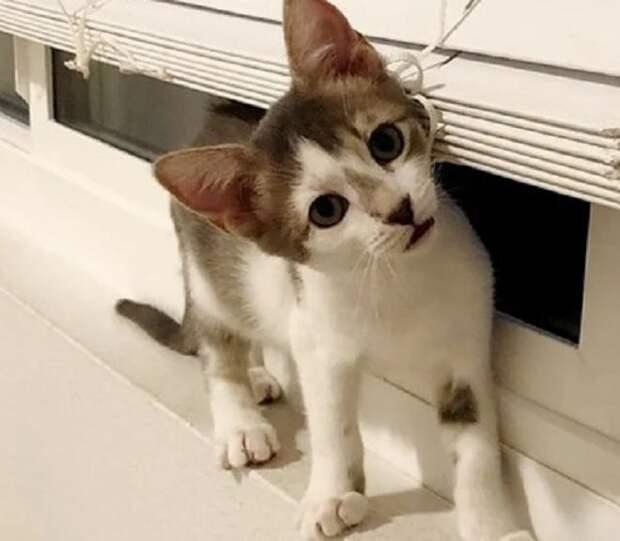 Слабенький котенок нуждался в особом внимании, а потому не мог оставаться в приюте. И тогда ему протянули руку помощи