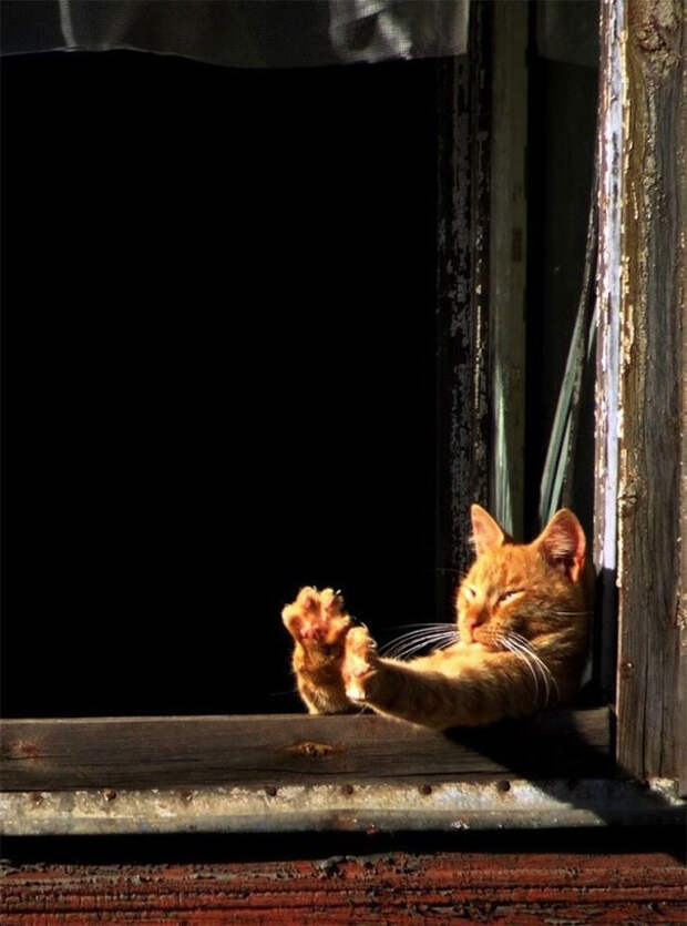 Солнечные лучи - это вещь! животные, котики, лучи, погреться, солнечные ванны, солнце, температура, тепло
