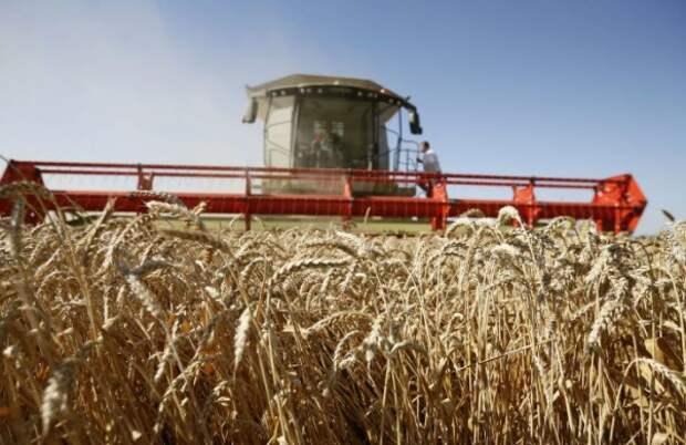 Урожай зерна в РФ в 2020