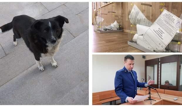 Итоги пятницы в Удмуртии: собачья преданность, старт выборов и фейковая ферма