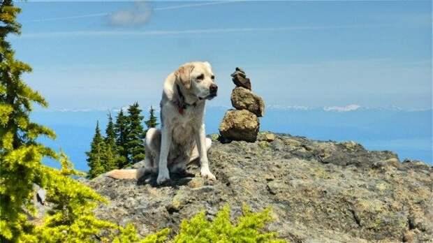 Две жизни горного пса Хэй