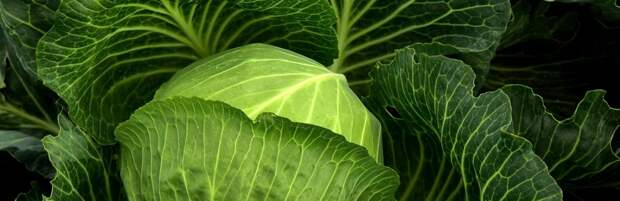 Алматы стало «лидером» по росту цен на капусту