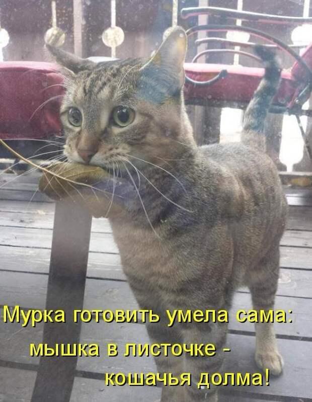 1450431504_kotomatrica-14