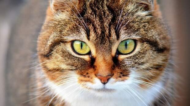 Домашний кот «повесился» на приоткрытом окне в Сахалинской области