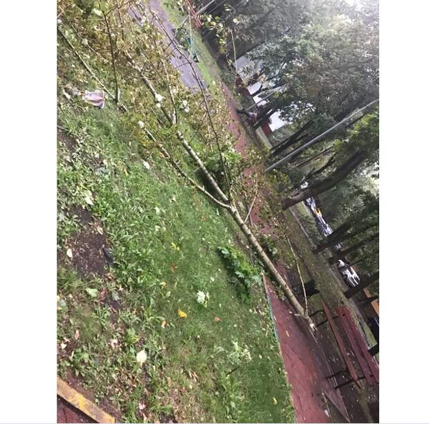 Во дворах в Кузьминках убрали сломанные во время урагана деревья
