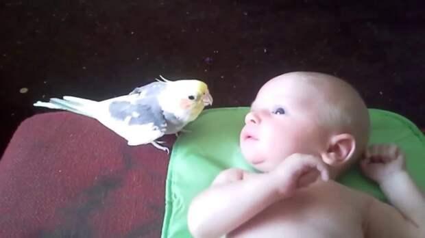 Попугай-нянька поет колыбельную новорожденному