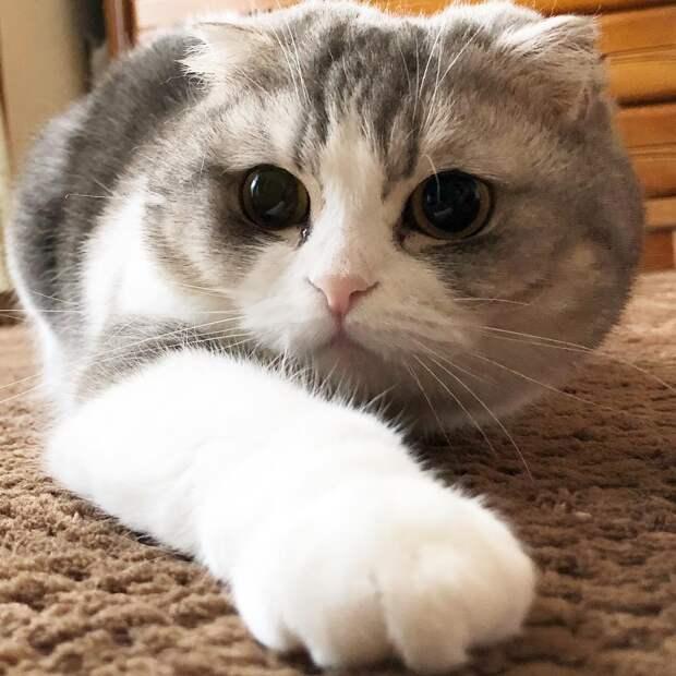 8 нешуточных способов заработать на коте: хватит уже сидеть сложа лапы!