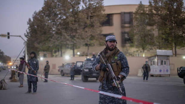 Талибы запретили вырубку леса в Афганистане и контрабанду древесины