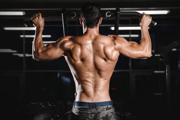 Тренировка спины — базовые упражнения и программа тренировок