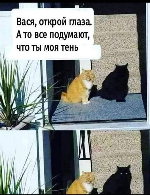 На изображении может находиться: кот, текст «вася, открой глаза. A TO все подумают, что ты моя тень N»