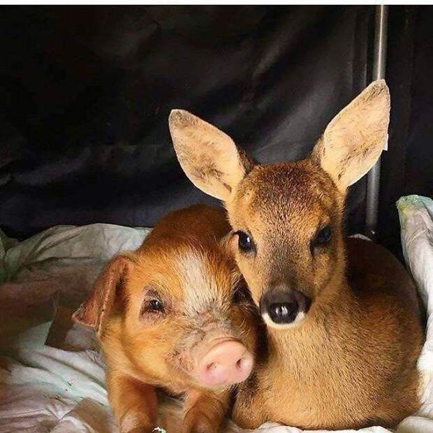 17 ярких примеров крепкой и бескорыстной дружбы между совершенно разными животными