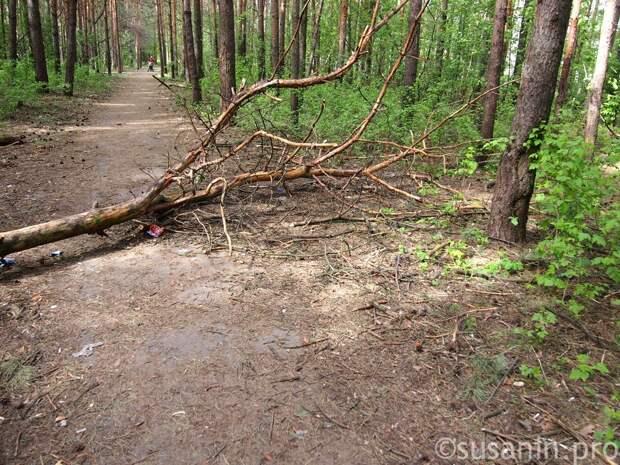 Завьяловский и Увинский районы Удмуртии больше всего пострадали от «чёрных лесорубов»