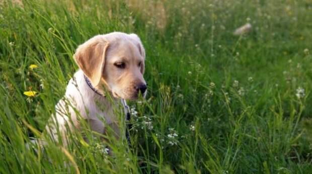 Как можно защитить свою собаку от клещей