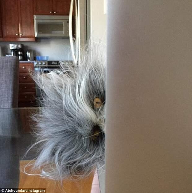 Кот или собака? Пушистый питомец стал новым объектом интернет-споров животное, кот, собака, спор