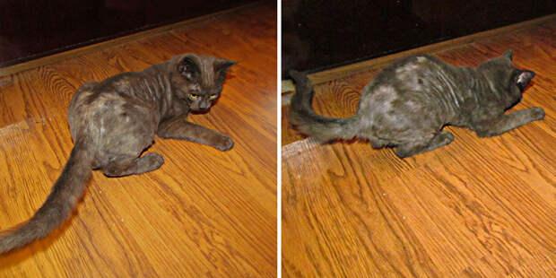История о том, как в жизни чёрного кота Бэтмэна наступила белая полоса