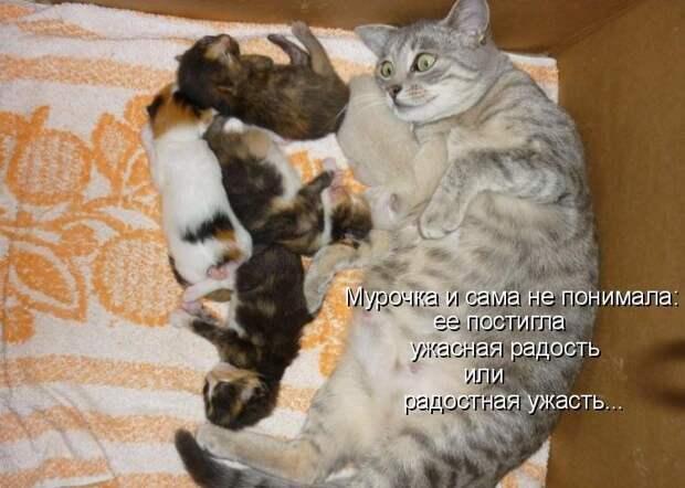1450431424_kotomatrica-19
