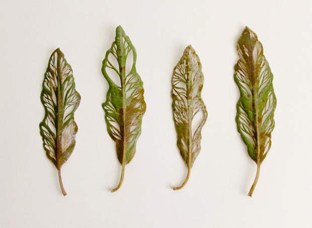 уникальная вышивка на листьях