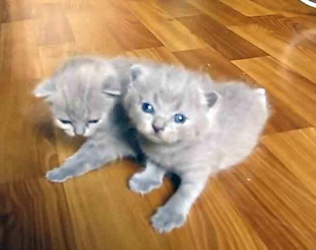 Котята делают первые шаги: милое видео
