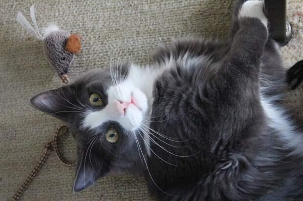 Топ-5 удивительных фактов о кошках