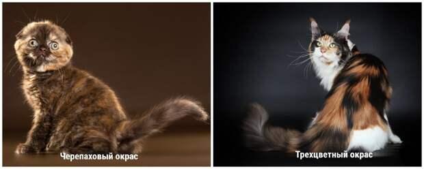 Коллаж создан специально для канала Про Кошек