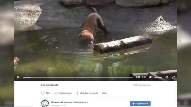 Животные в Московском зоопарке 18 мая открыли купальный сезон