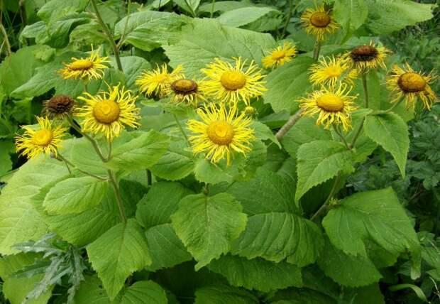 Пять самых красивых травянистых великанов для садового дизайна